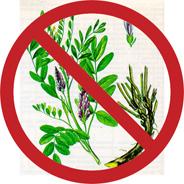лекарственные растения и беременность