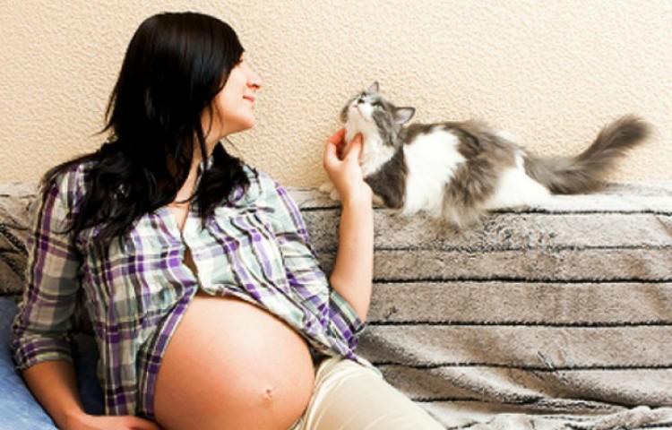 Беременность и кошка